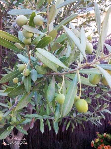 escapade en lubéron les oliviers