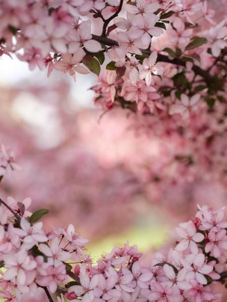 moodboard mars envie de printemps mademoiselle cereza creatrice bijoux mariage